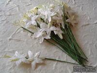 Гладиолусы White,  белый, 25 мм, 5 шт.