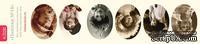 Полоски с картинками от Тамары Старцевой - №18, 21,5 см, 6 шт.