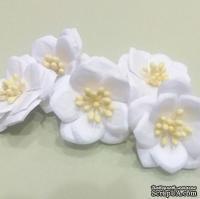 Магнолии от Scrap Klumba, белые,   5 шт., диаметр 4 см