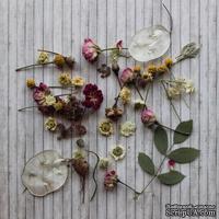 Набор сушеных листочков и цветочков с объемными элементами