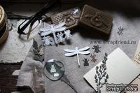 Набор ножей для вырубки от Scrapfriend - Насекомые, 4 штуки