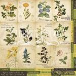 Карточки Botany summer (укр.), ТМ Фабрика Декору - ScrapUA.com
