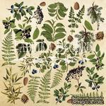Лист для вырезания №2 Botany summer (eng.), ТМ Фабрика Декору - ScrapUA.com