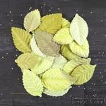 ЦЕНА СНИЖЕНА! Листики Prima - Bethany Collection - Leaves Embellishments - Greenery - ScrapUA.com