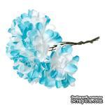 Астры, цвет голубой/белый, 9 см, букетик, 6шт. - ScrapUA.com