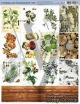 """Лист с картинками """"Лес"""", дизайн Елены Виноградовой, 19.5х27 - ScrapUA.com"""