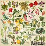 Лист с картинками для вырезания Botany exotic 30,5х30,5 см, ТМ Фабрика Декора - ScrapUA.com