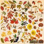 Лист с картинками для вырезания Autumn botanical diary 30,5х30,5 см, ТМ Фабрика Декора. - ScrapUA.com