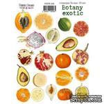 Набор наклеек (стикеров) 19 шт Botany exotic 206, ТМ Фабрика Декора - ScrapUA.com