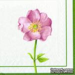"""Салфетка для декупажа """"Первоцвет"""", размер: 33х33см - ScrapUA.com"""