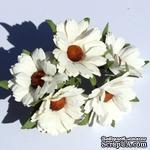 Белые ромашки, 5 шт. - ScrapUA.com