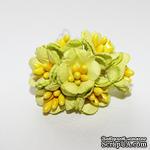 Лютики, цвет салатовый, 7 шт. - ScrapUA.com