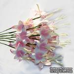 Гладиолусы, цвет бело-розовый, 25 мм, 5 шт.  - ScrapUA.com