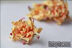 Гардения, диаметр 5 см, цвет желтый, 1 шт. - ScrapUA.com