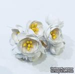 Цветы яблони, 5 штук, диаметр 18-20мм,  цвет - белый - ScrapUA.com