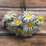 Хризантемы, цвет слоновой кости, диаметр 20-25мм, стебелек 10 см, 10 шт. - ScrapUA.com