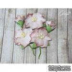 Набор цветов TM Iris - Blossom Бежевые, 5 шт - ScrapUA.com