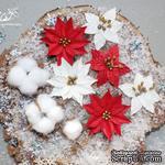 Набор цветов TM Iris - Cortez Red and white, 9 шт - ScrapUA.com
