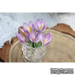 Набор цветов TM Iris - Крокусы фиолетовые, 5 шт - ScrapUA.com