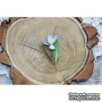 Набор цветов TM Iris - Крокусы синие, 5 шт - ScrapUA.com