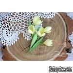 Набор цветов TM Iris - Крокусы желтые, 5 шт - ScrapUA.com