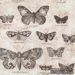 Ткань 100% хлопок - Tim Holtz Eclectic - Butterflies-Taupe, 45х55 см - ScrapUA.com