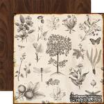 Лист двусторонней бумаги от Echo Park -  Botanical, Reflections - ScrapUA.com