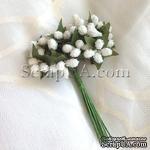 Веточки с полупрозрачными маленькаими ягодками, цвет белый, 1 пучок из 12 штук - ScrapUA.com