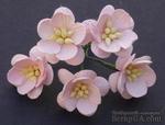 Цветы вишни, цвет бледно-розовый, диаметр - 25мм, 5 шт. - ScrapUA.com