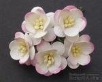 Цветы вишни, цвет белый с розовым, диаметр - 25мм, 5 шт. - ScrapUA.com