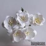 Цветы вишни, цвет белый, диаметр - 25мм, 5 шт. - ScrapUA.com