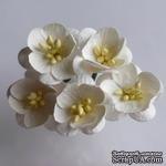 Цветы вишни, цвет слоновой кости, диаметр - 25мм, 5 шт. - ScrapUA.com