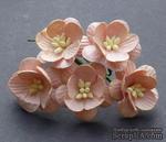 Цветы вишни, цвет персиковый, диаметр - 25мм, 5 шт. - ScrapUA.com