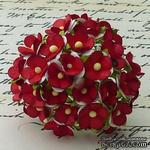 Цветочки любви - sweetheart, цвет белый с красной серединкой, диаметр - 15мм, 10 шт. - ScrapUA.com
