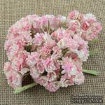 Гипсофила от Thailand, цвет бежевый/розовый, 10 шт - ScrapUA.com