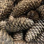 Шишка елочная, цвет коричневый, 1 шт. - ScrapUA.com