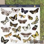 Лист двусторонней бумаги 20х20см Бабочки Herbarium Wild summer от Scrapmir - ScrapUA.com