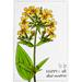 Набор открыток для раскрашивания маркерами Botany Summer, ТМ Фабрика Декору - ScrapUA.com